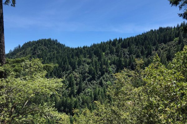 Butte Creek Forest Land For Sale